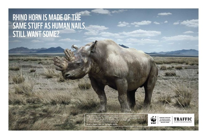 TRG supports WWF & TRAFFIC's protect rhino campaign
