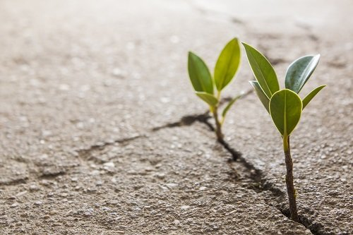 bigstock Weed Growing Through Crack In  43558837