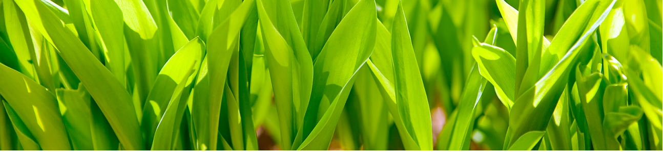 green_grass.png